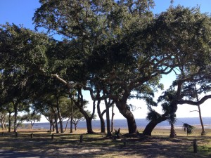 Carrabelle bypass, a place where bears historically come to the coast to forage for acorns in the fall.